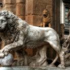 Picture - Lion sculpture in Loggia dei Lanzi.