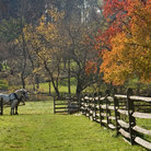 Picture - Horses in the fall at Longstreet Farm in Holmdel.