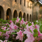 Picture - Azaleas on the grounds of Louisiana State University.