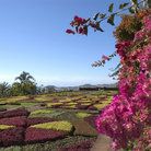 Picture - The Botanical Garden in Funchal, Madeira.