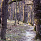 Picture - Trees in Maksimir Park, Zagreb.