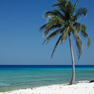 Picture - A white sand beach and palm tree at Maria la Gorda.