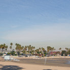 Picture - Palm trees along the beach at Marina del Rey.