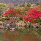 Picture - Autumn in the Maruyama park in Kyoto.