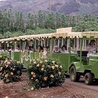 Picture - Tram at Maui Tropical Plantation in Wailuku, HI.