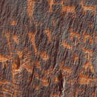 Picture - Rock wall full of petroglyphs near Moab.