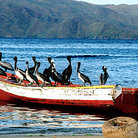 Picture - Pelicans on fishing boat in Santa Fe.