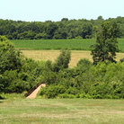 Picture - The battle field at Monmouth Battlefield State Park, New Jersey.