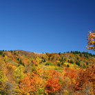 Picture - Fall colors on the hillside in Monogahela National Park in West Virginia.