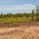 Picture - Country meadow in Dolly Sods, Monongahela National Forest, West Virginia.