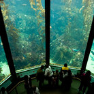 Picture - Visitors in front of the kelp forest tank at the Monterey Aquarium.