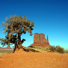 Picture - Tree and butte in Monument Valley.