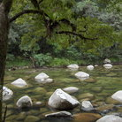 Picture - Mossman Gorge.