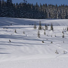 Picture - Nordic Ski Area at Snoqualmie.