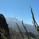 Picture - A view from partway up the Shira route on Mt. Kilimanjaro.