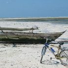 Picture - The tide has gone out on Paje beach in Zanzibar.