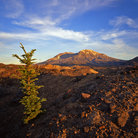 Picture - View of Mount St Helens in summer.