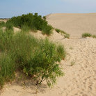 Picture - Sand dunes at Jockey's Ridge State Park, Nags Head.