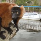Picture - A cruise at the Naples Zoo and Caribbean Gardens.