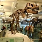Picture - Tyrannosaurus rex looming above visitors in the Hall of Saurischian Dinosaurs at the American Museum of Natural History in New York City.