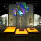 Picture - The Anne and Bernard Spitzer Hall of Human Origins at the American Museum of Natural History in New York City.