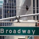 Picture - Broadway street sign in New York City.