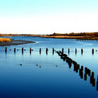 Picture - A salt marsh near Brooklyn.