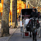 Picture - Horse and carriage, Central Park, New York City.