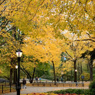 Picture - Central Park in Autumn, New York City.