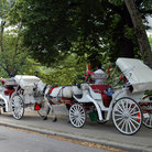 Picture - Horses and Carriages in Central Park, New York City.