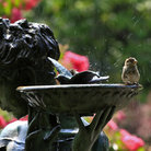 Picture - A bird bath at the Conservatory Garden in Central Park, New York City.
