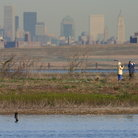Picture - Birding in Jamaica Bay Wildlife Refuge West Pond, Queens.