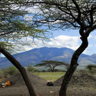 Picture - Trees and mountains on the landscape in the Ngorongoro Conservation Area.