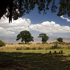 Picture - Trees and clouds in Ngorongoro Crater.