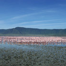 Picture - Flamingos in the Ngorongoro Crater.