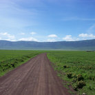 Picture - A road through the Ngorongoro Crater.