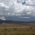 Picture - Landscape of the Ngorongoro Crater.