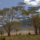 Picture - Trees and hills in the Ngorongoro Crater.