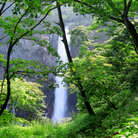 Picture - The Kengo waterfall at Nikko.