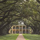 Picture - Pathway leading to front of Oak Alley Plantation in Vacherie, LA.