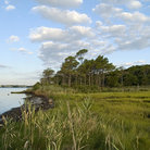 Picture - Wetlands near Ocean City, Maryland.