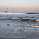 Picture - Waves crashing on the shore at Ocean Grove.