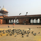 Picture - Pigeons at Jama Masjid in Delhi.
