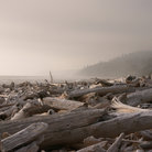 Picture - Logs on the beach at Olympic National Park.
