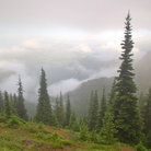 Picture - Mountain meadow in the Olympic National Park, Washington.