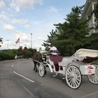 Picture - Horse and carriage making its way to the Opryland Hotel in Nashville.