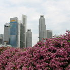 Picture - Spring flowers and tall buildings.