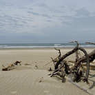Picture - Driftwood on the shore at Oregon Dunes National Recreation Area.
