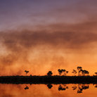 Picture - A bush fire in Western Australian Outback.