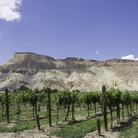 Picture - Mount Garfield and an orchard near Palisade.